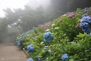 170704 (82)霧のあじさい坂.jpg