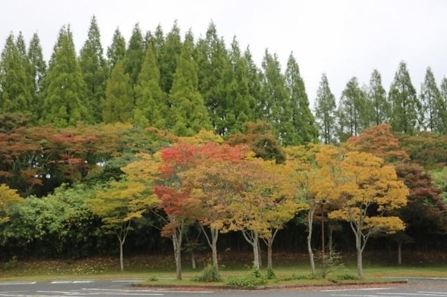 171015ケヤキ紅葉駐車場 (2).jpg