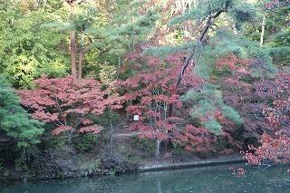 s-171102 (6)長谷池イロハモミジ ハナノキ紅葉.jpg