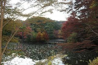 s-171102 (69)長谷池ハナノキ紅葉.jpg