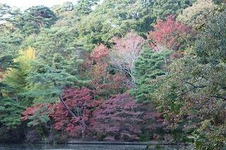 s-171102 (7)長谷池イロハモミジ ハナノキ紅葉.jpg