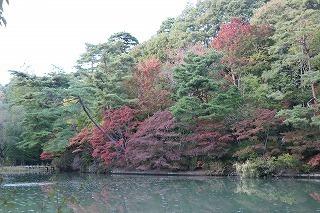 s-171102 (9)長谷池イロハモミジ ハナノキ紅葉.jpg